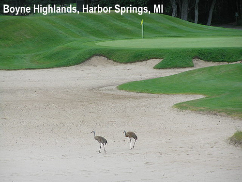 golf-wildlife-002a.jpg