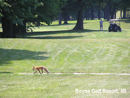 golf-wildlife-005a.jpg