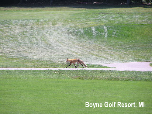 golf-wildlife-006a.jpg
