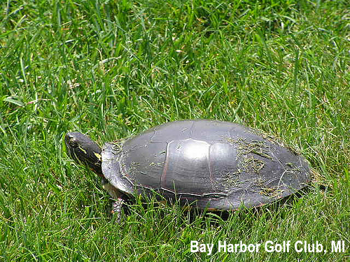 golf-wildlife-007a.jpg