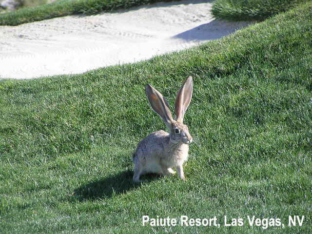 golf-wildlife-009a.jpg