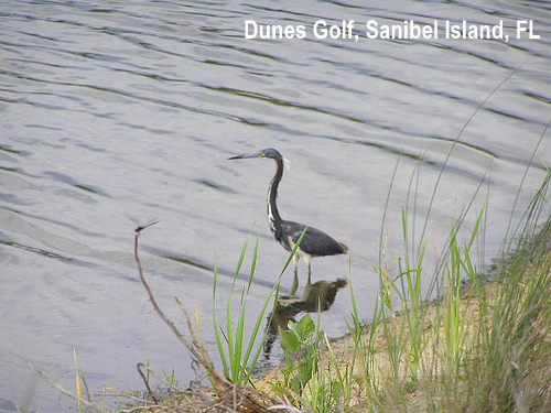 golf-wildlife-012a.jpg