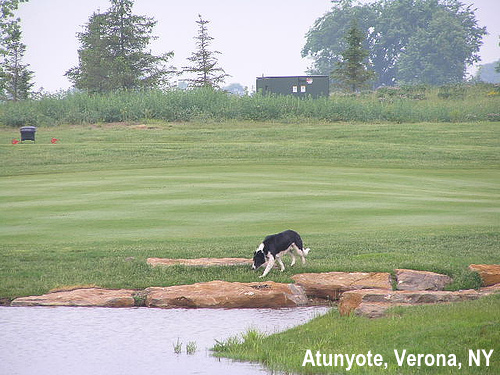 golf-wildlife-017a.jpg