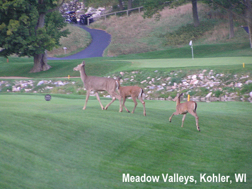 golf-wildlife-024a.jpg