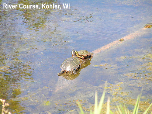 golf-wildlife-026a.jpg