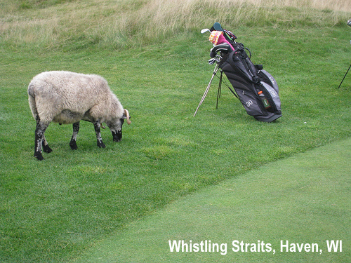 golf-wildlife-030a.jpg