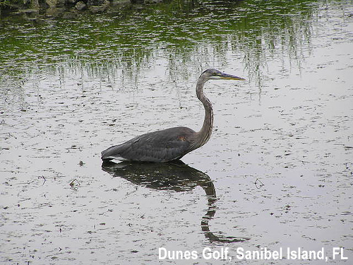 golf-wildlife-032a.jpg