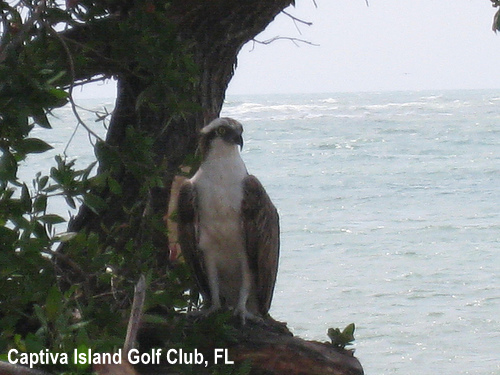 golf-wildlife-037a.jpg