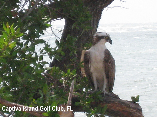 golf-wildlife-038a.jpg