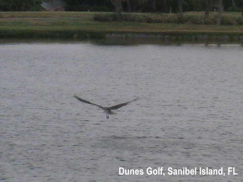 golf-wildlife-039a.jpg