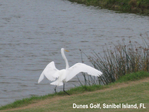 golf-wildlife-040a.jpg