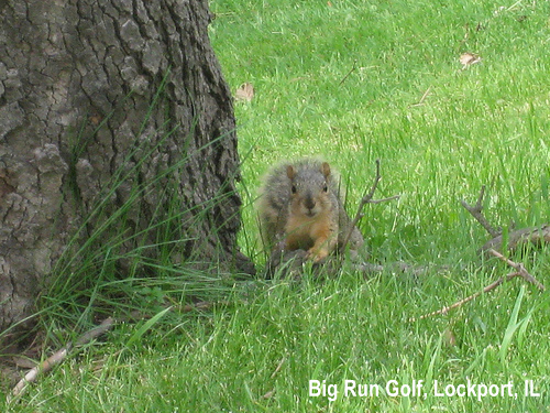golf-wildlife-045a.jpg